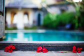 Red flowers near swimming pool — Stock Photo