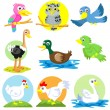 Stock Photo: Poultry bird set