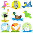 Poultry bird set — Stock Photo