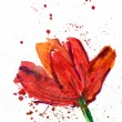 Floral watercolor illustration of poppie flowers for card design. — Stock Photo #26380503