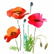Floral watercolor illustration of poppie flowers for card design. — Stock Photo