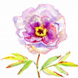Luxurious white peony flower painted in pastel colors. painting — Stock Photo #26381193