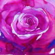 Big pink rose . watercolor — Stock Photo