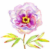 Luxurious white peony flower painted in pastel colors. painting — Stok fotoğraf