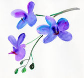 Orchid flowers. watercolor — Stock Photo