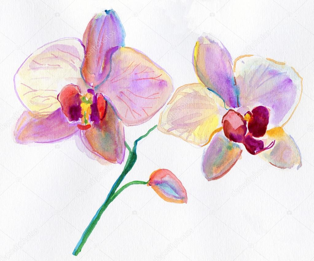 gemalten aquarellbilder orchideen stockfoto olies 26381547. Black Bedroom Furniture Sets. Home Design Ideas
