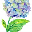 Beautiful Hydrangea blue flowers, watercolor illustration — Stock Photo #26502739