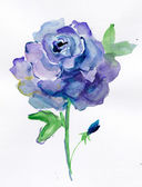 A blue rose isolated on a white background. watercolor — Stock Photo