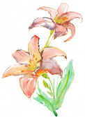 Lilies isolated over white background. watercolor — Stock Photo