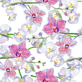 Seamless pattern with orchids — Stock Photo