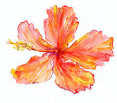 Lilies — Stock Photo