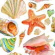 Seashell and sea star watercolor illustration — Stock Photo