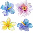 Set of watercolor blue hibiscus flower,white peony flower and yellow flower — Stock Photo #30375799