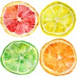 Collection of fresh ripe orange, lemon, lime, grapefruit — Stok fotoğraf