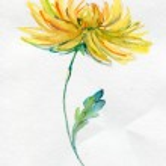 Beautiful flowers — Stock Photo #32835917