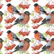 Bullfinch and rowan — Stock Photo