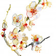 Stock Photo: Card, the card with blossoming cherry-tree branches.