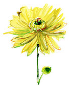 Watercolor illustration with beautiful chrysanthemum flower — Photo