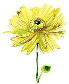 Watercolor illustration with beautiful chrysanthemum flower — Stock Photo