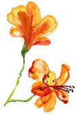 Beautiful Clove flower, watercolor illustration — ストック写真