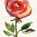 Rose flower. — Stock Photo #38112091