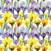 Crocus flowers. — Stock Photo