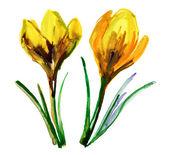 Yellow crocus flowers. — Stock Photo