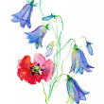 Illustration with beautiful flowers — Stock Photo #39972927