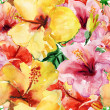 Yellow and red hibiscus — Stock Photo #40606259