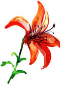 Lilies flowers — Stock Photo