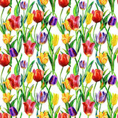 原始的郁金香花 — 图库照片