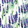Watercolor seamless lavender pattern — Stock Photo