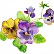 Bright purple and yellow flowers — Stock Photo