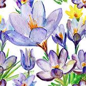 クロッカスの花 — ストック写真