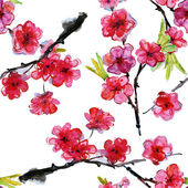 Cherry and plums flowers — Stock Photo