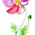 Flowers — Stock Photo #44148227