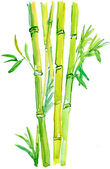 Bamboo branch. — Stock Photo