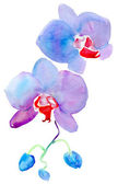 Orchid. Watercolor. — Stockfoto