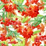 piękna Czerwona jarzębina owoce gałązka — Zdjęcie stockowe #51124759