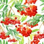 bella rosso sorbo ramoscello di bacche — Foto Stock #51124867