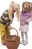 Girls investigating cats in basket — Stock Photo