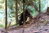 Paintball Players Hide Behind Tree — Stock Photo