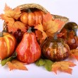 Thanksgiving decoration — Foto de Stock