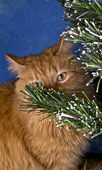 Cat och christmas tree — Stockfoto