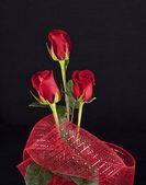 赤いバラ — ストック写真