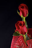 Red roses — Foto Stock
