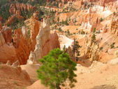Bryce Canyon, USA — Stock Photo