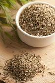Fennel Seed Spice  — Foto de Stock