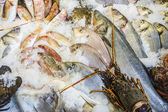 Mediterranean fish on ice — ストック写真