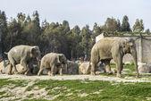 Olifant familie — Stockfoto